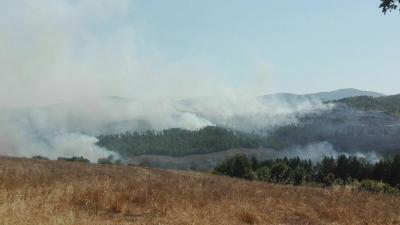 Ripreso l'incendio tra Chiusdino e Radicondoli